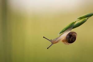 Snailey by SzymonMic