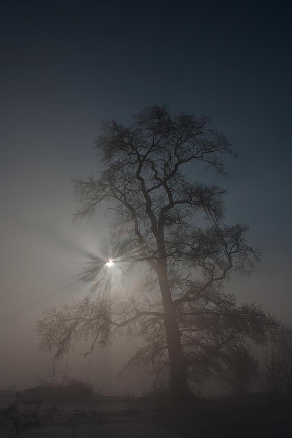 Tree, fog, rays and eclipse by SzymonMic
