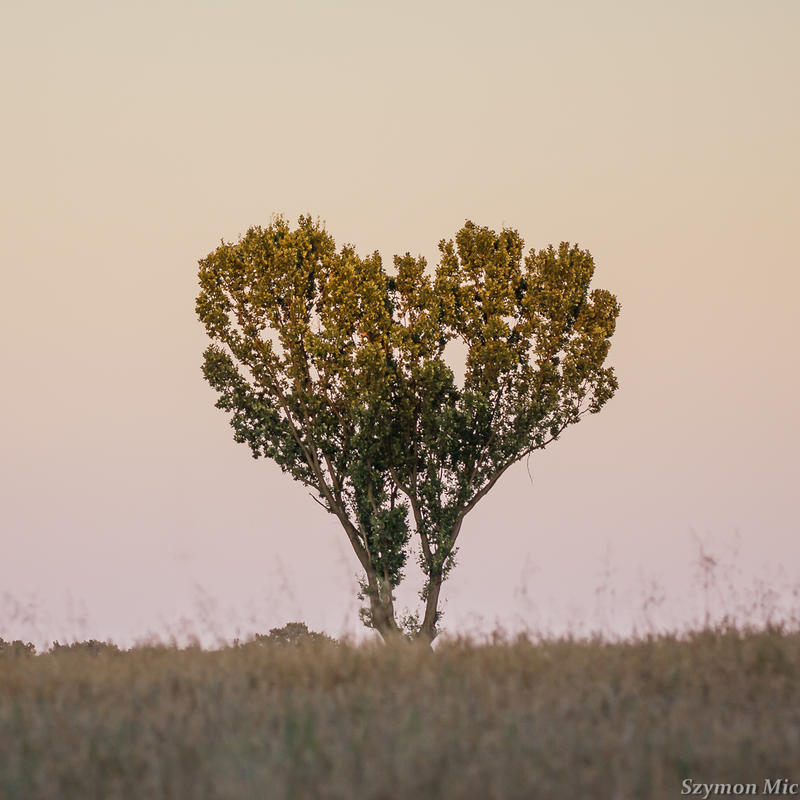 Love this tree by SzymonMic