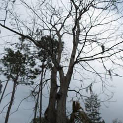 Creepy Tree by Barbaric-D