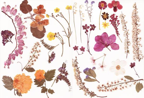 Pressed flowers stock