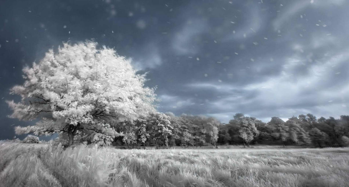 Hoarfrost Wonderland - Infrared Tree by Archangelical