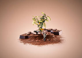 Fair Trade - Cacao by Kevin-Roodhorst