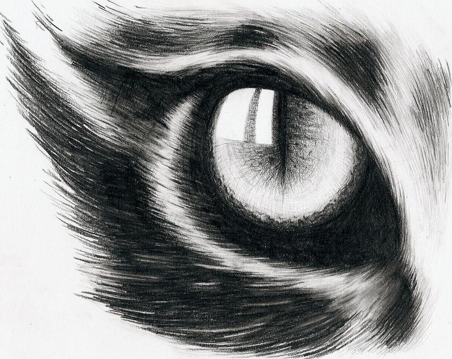 Eye of a cat by hitforsa on deviantART