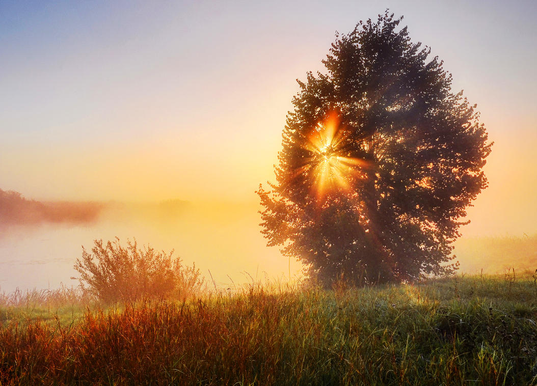 This Tree That Blocks The Sunlight - Poem by Edward Ibeh