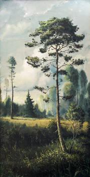 Summer pine