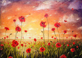 Poppies at sunset author's copy