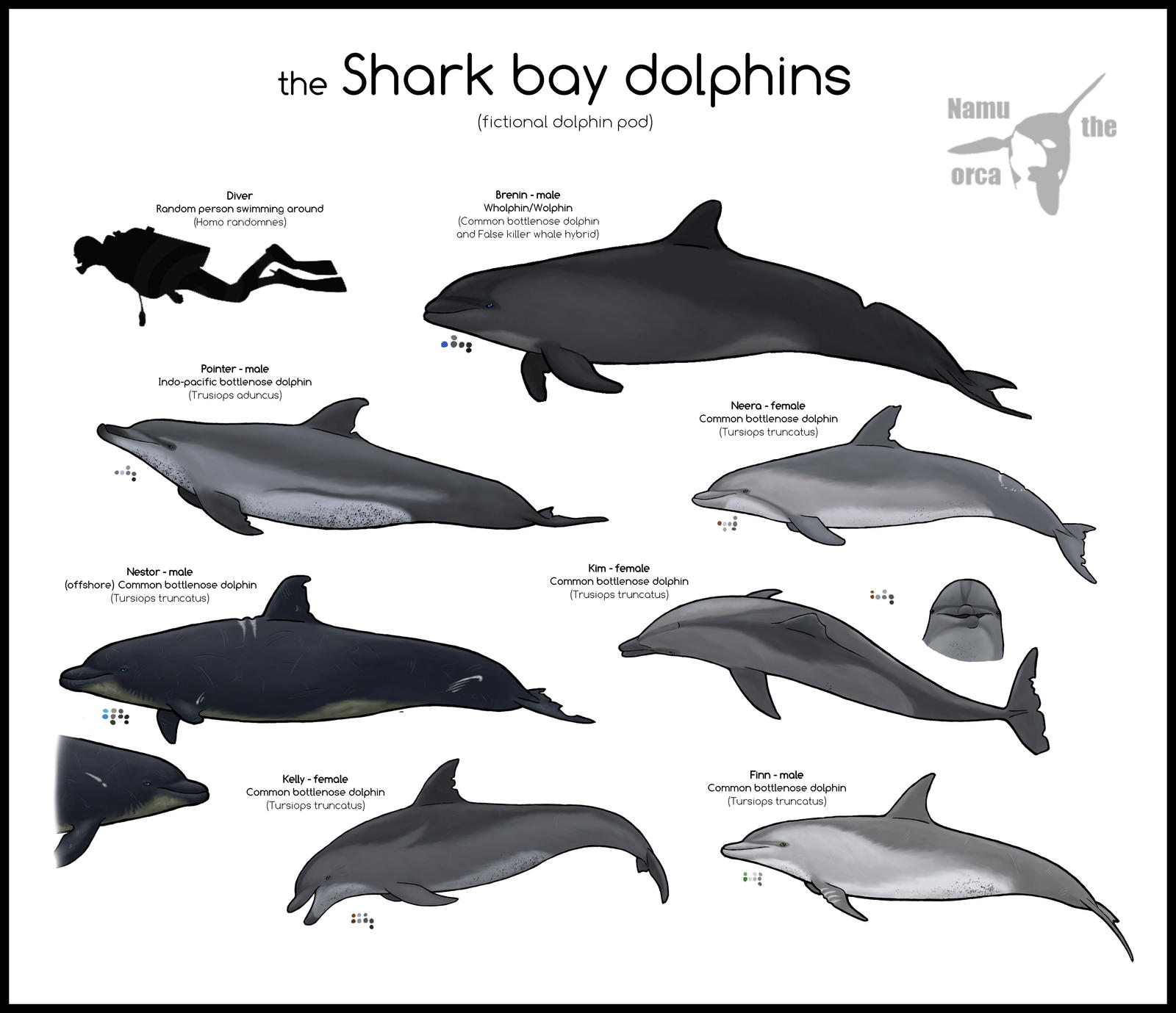 the Shark bay dolphins by namu-the-orca on DeviantArt