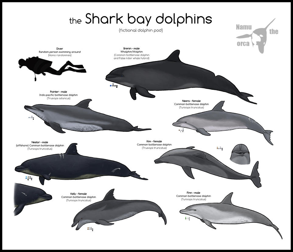 the Shark bay dolphins by namu-the-orca
