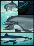 a Wholphin's journey - P 01