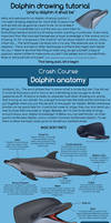 Dolphin drawing tutorial :D