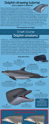 Dolphin drawing tutorial :D by namu-the-orca
