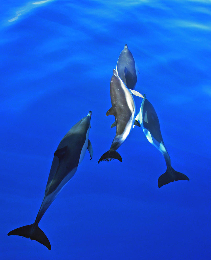 Group dynamics by namu-the-orca