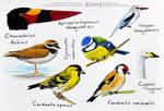 Some birds in watercolour