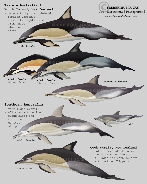 JFD  Welcome to Joe Flahertys Dolphins