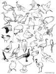 Bird practice sketches