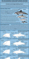 Tips for drawing young (Bottlenose) dolphins