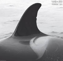 A41's identity by namu-the-orca