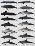 Cetaceans of Nicaragua