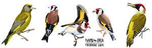 Watercolour bird studies