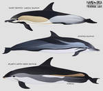Menu dolphin friends