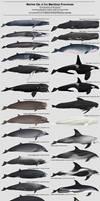 Marine Life of the Maritime Provinces