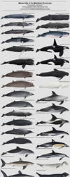 Marine Life of the Maritime Provinces by namu-the-orca