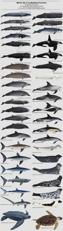 Marine Life of the Maritime Provinces