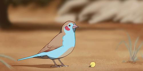 Red-cheeked cordon-bleu animation by namu-the-orca