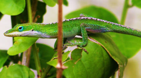 Martian Lizard
