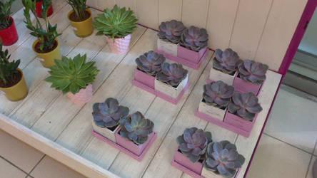 Petites plantes grasses by LiliPoun