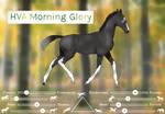 HVA Morning Glory [Zlesdin]