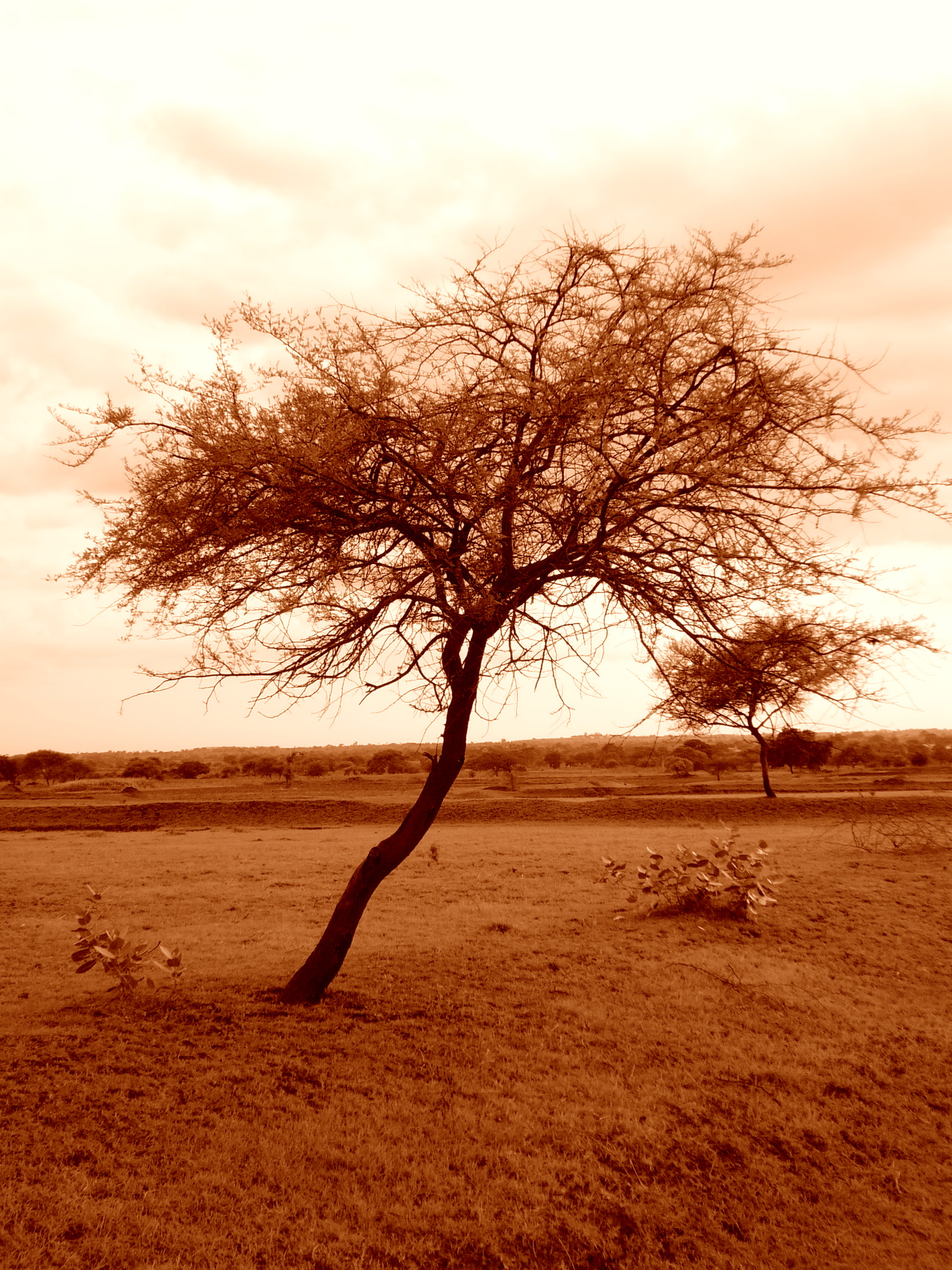Parallel Solitary by d-ravi