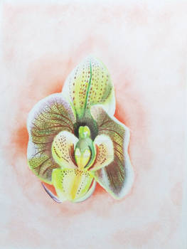 Floating Orchid