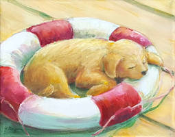 Rescue Dog