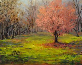 Okame cherry. by herrerojulia