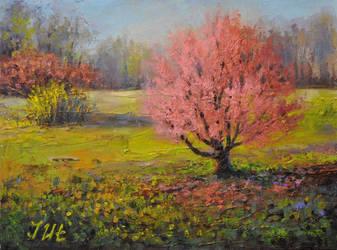Spring. Part 1. Blooming Cherry. by herrerojulia