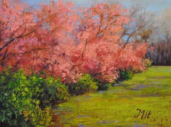 Spring. Part 2. Abundance. by herrerojulia