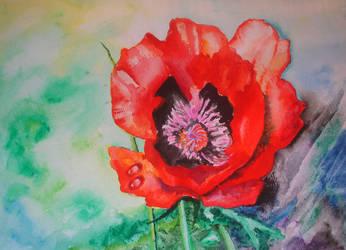Poppy. by herrerojulia