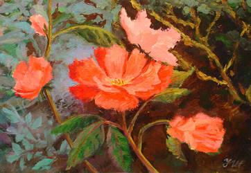 Wild rose. by herrerojulia