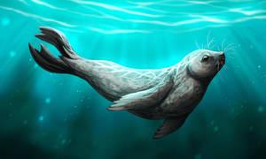 tell me, grey seal