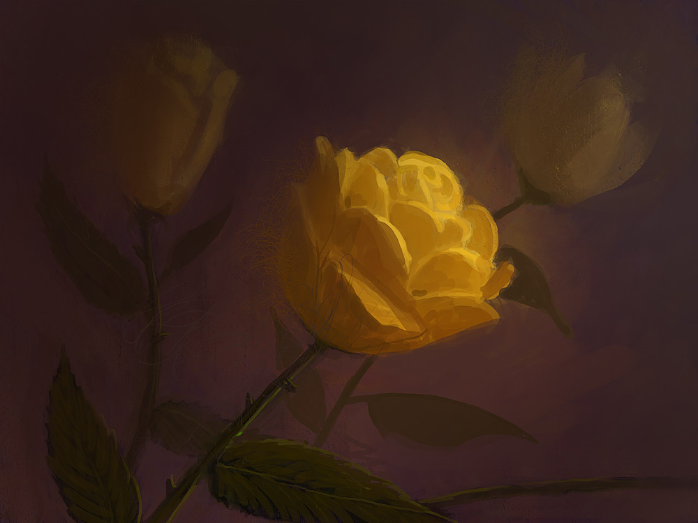 Yellow Roses by DM7