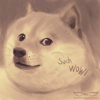 Study: Such Doge Such Wow by DM7