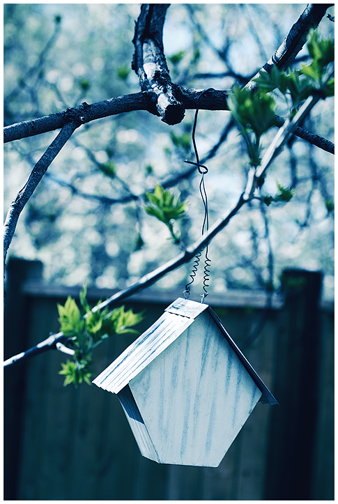 Bird House by twistedelegance - Avatar Bulmaca
