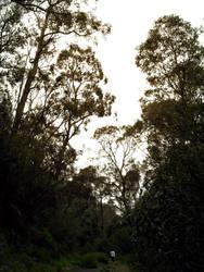 Forest Walk by WinterCombatKnight