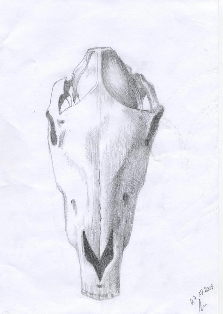 horse\' skull by Scarpathos on DeviantArt