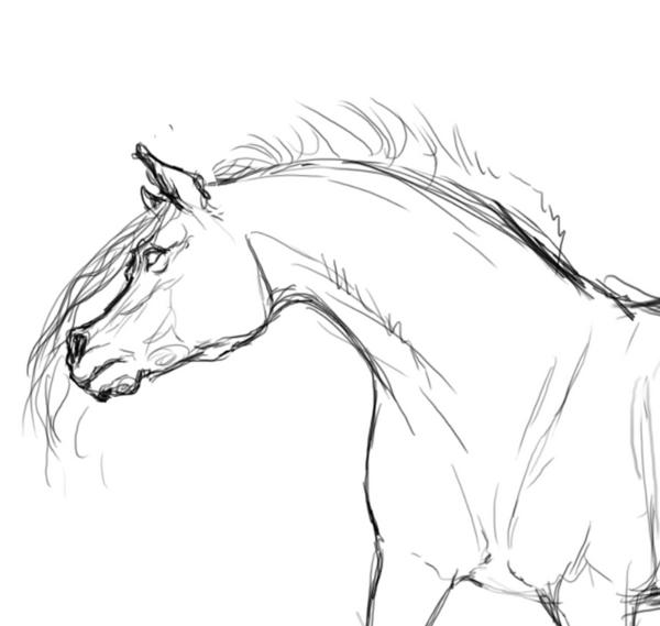 Horse bust sketch by Seranalu