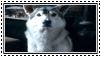 GoT:Nymeria Stamp by kiananuva12