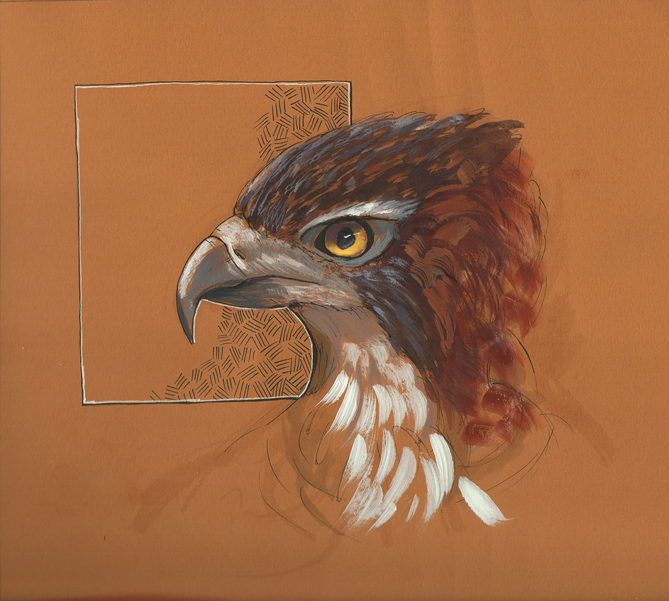 hawk_sketch_by_robertogatto-d8m1p1t.png