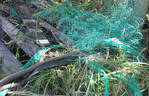 Eastern Brown Snake Rescue 3